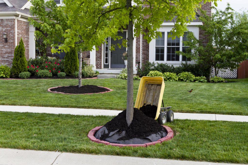 putting fertilizer to the plants