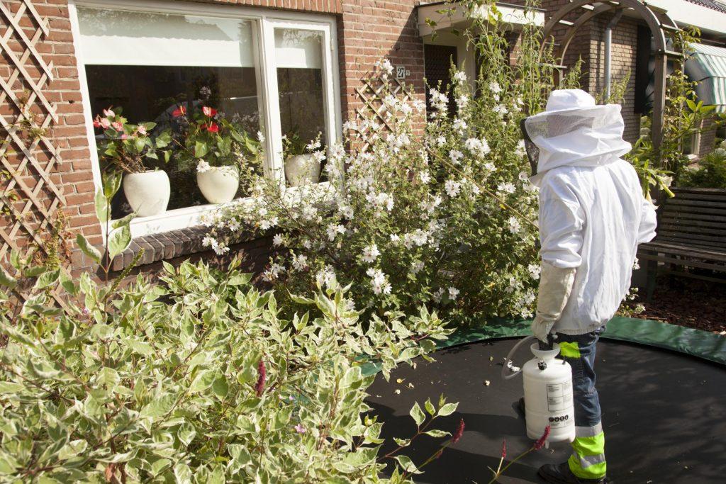 man spraying the flowers