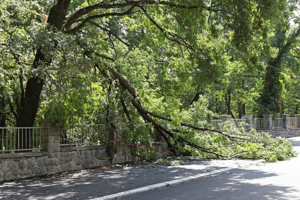 tree obstructions on the road